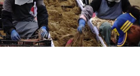 潮「風」農法